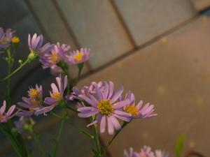 20101128flower